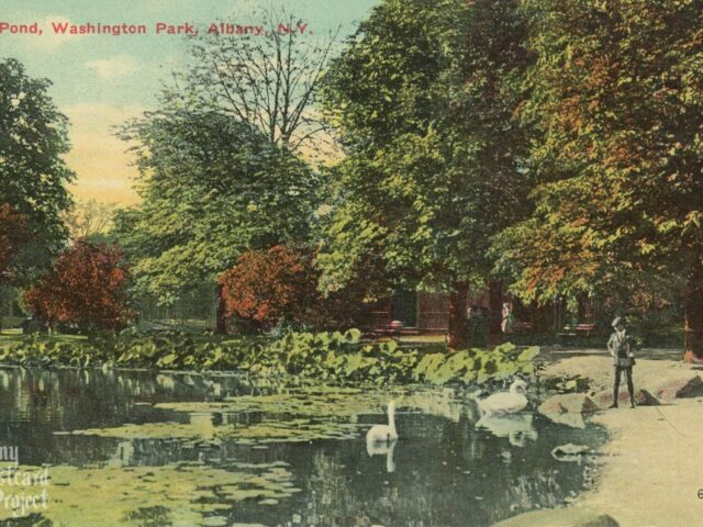 Lily Pond, Washington Park