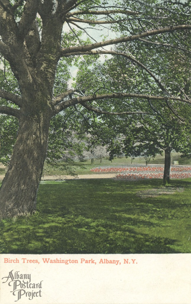 Birch Trees, Washington Park